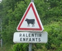 panneau signalisation attention enfants vache