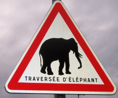 traversee-elephants.png